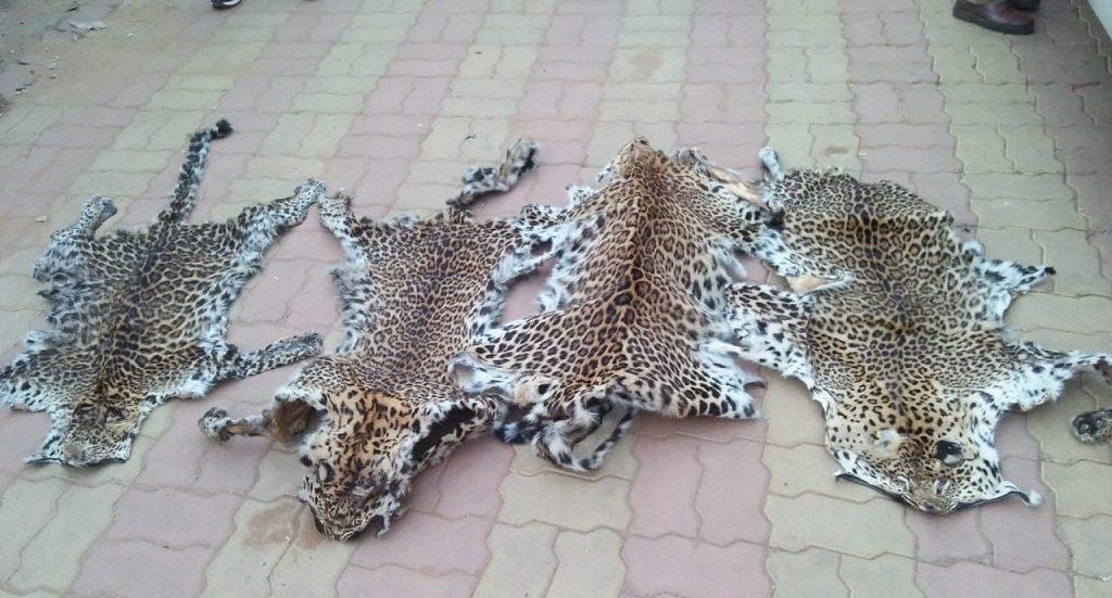 Three more arrested in Sambalpur leopard skin seizure case