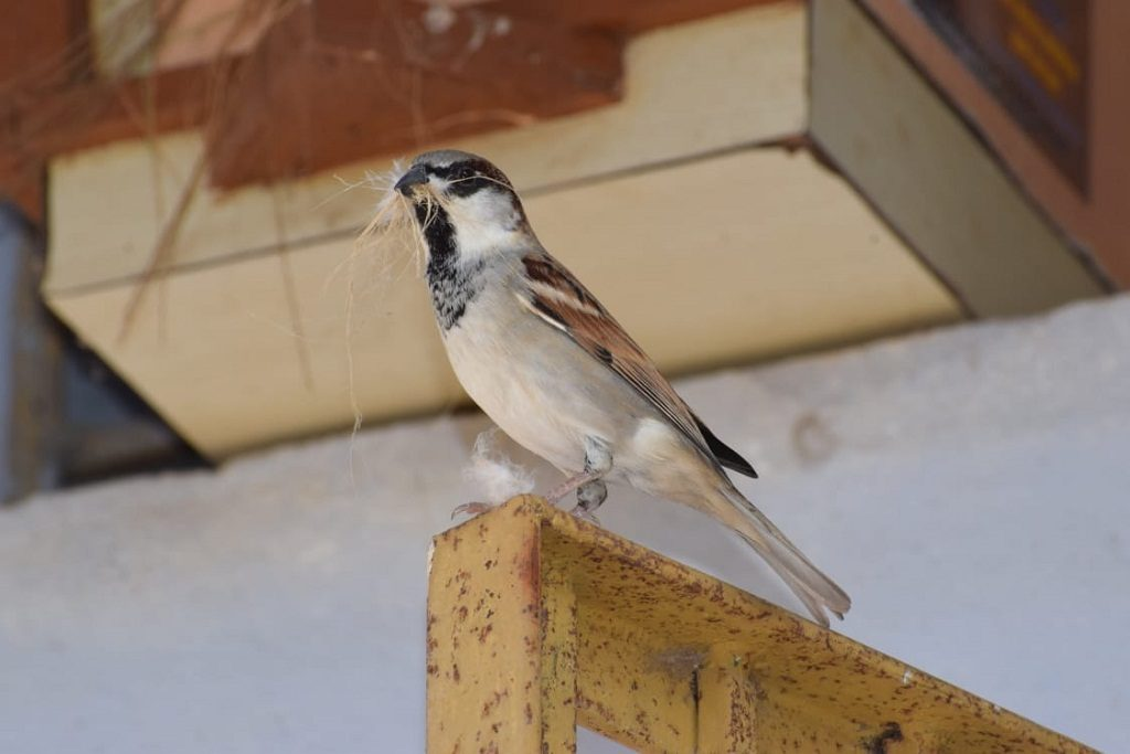 World Sparrow Day: Ganjam villagers woo back winged companions
