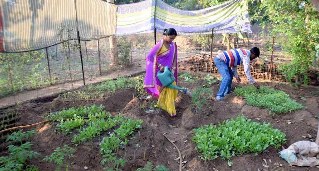 Odisha women fight malnutrition with backyard gardens