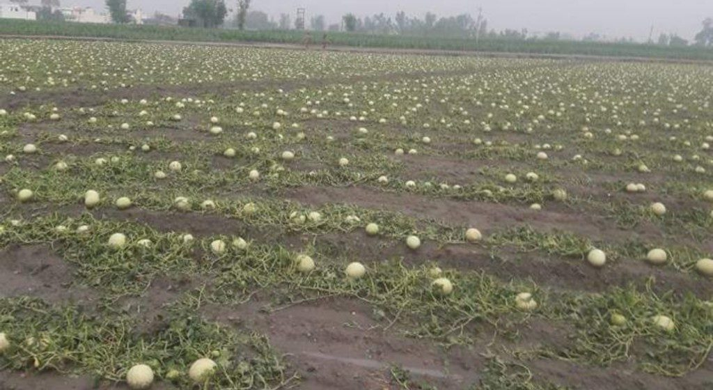 Fani damages crops, farmers promised help by Kendrapara district admin