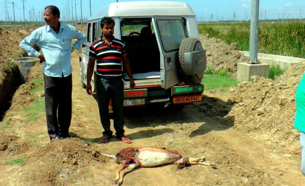 Deer carcass found in Paradip