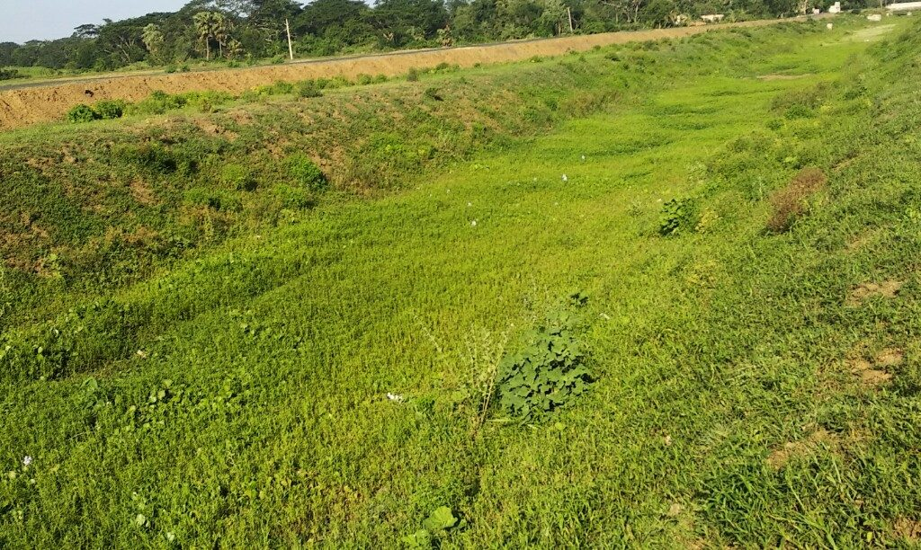 Kendrapara farmers parched of water, stare at fallow land