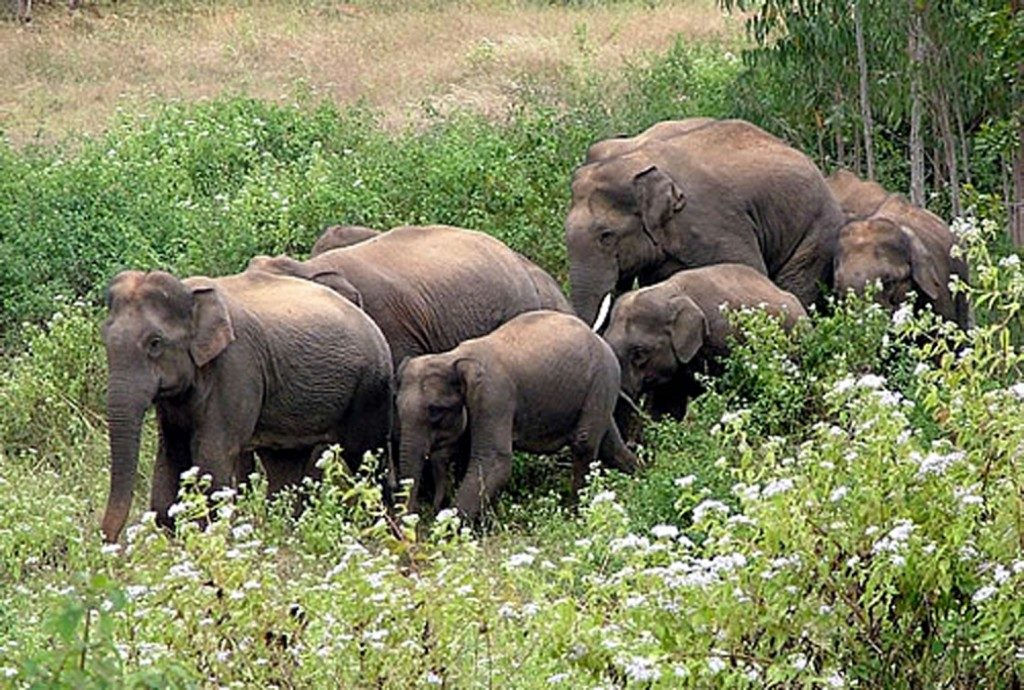 Villagers near Kapilas forest peeved by pachyderm menace