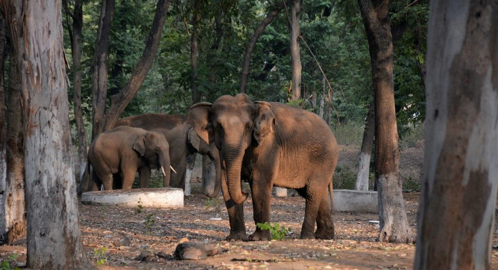Elephants kill around 100 people every year in the state