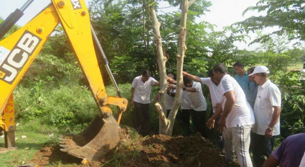 Axed trees replanted by Berhampur-based group