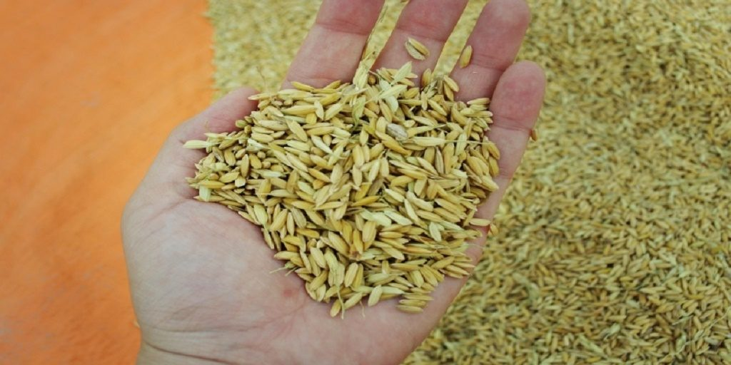 Odisha seeks support for climate-resilient seeds