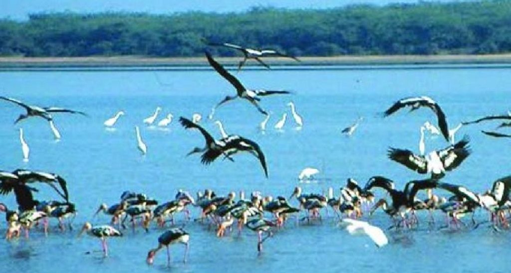 Surveillance at Chilika to protect water fowls