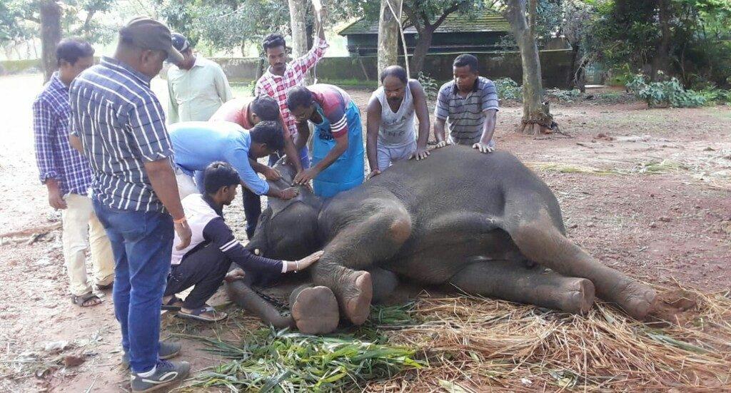 Another elephant dies at Nandankanan Zoo