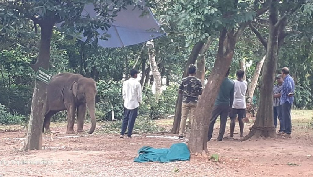 Nandankanan loses its fourth elephant in less than a month