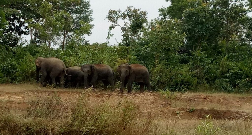 Wildlife experts suggest SMS system to warn villagers of elephant movement