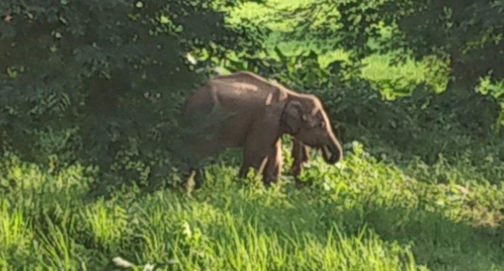 Elephant kills farmer in Balangir