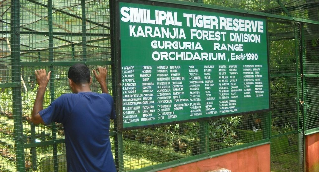 Similipal tiger reserve thrown open for tourists