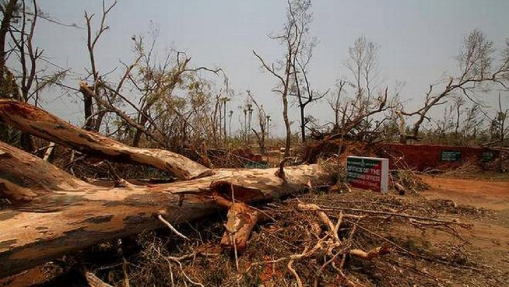 Govt to make use of cyclone ravaged trees in Jagannath temple