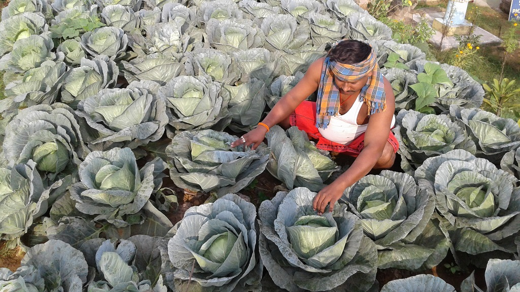 Vegetable prices jump due to untimely rain