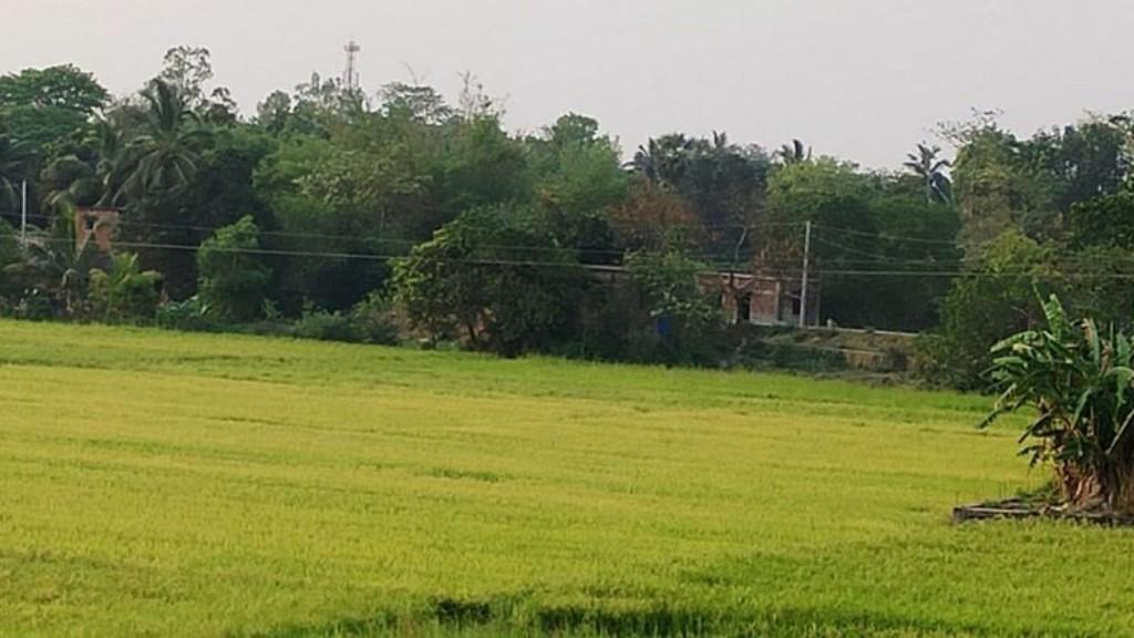 Lockdown hits harvesting activity in Balasore district